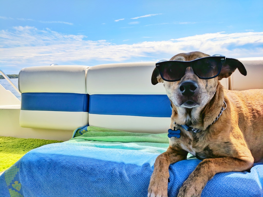 dog wearing sunglasses on the beach in the summer