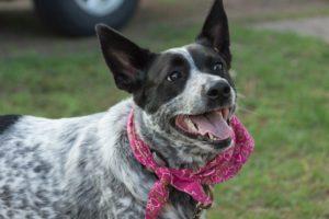 dog with a bandana