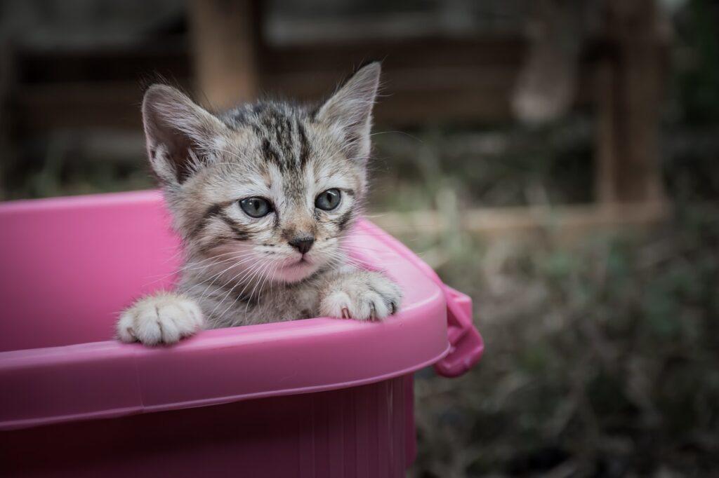 kitten in a cat litter box tray