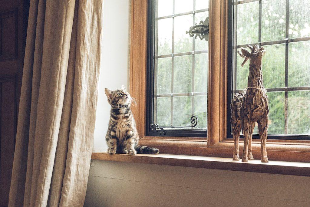 kitten looking curiously at a giraffe statue