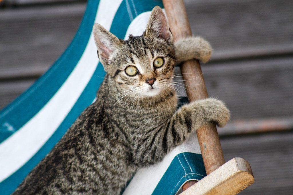 Caring for a kitten - kitten on a beach chair