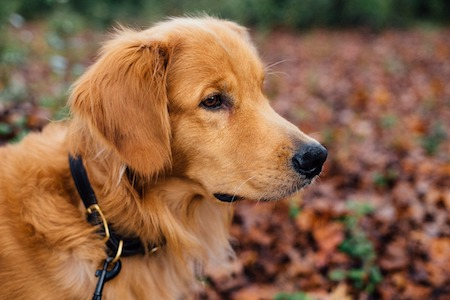 mishi pets - dog breeds