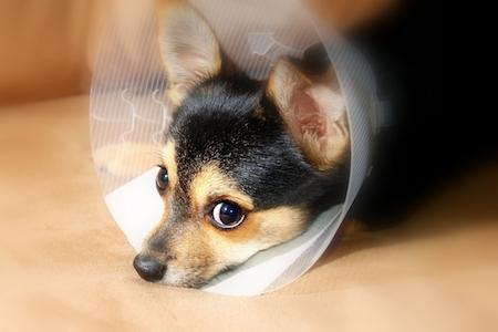 mishi pets - dog health