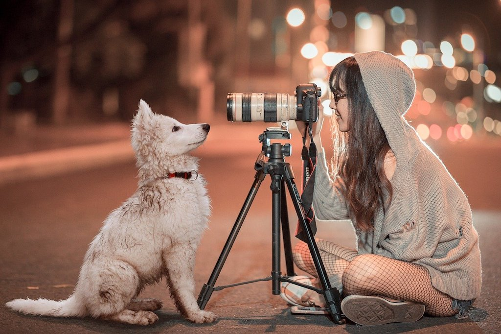 puppy looking at a camera - do dogs understand words