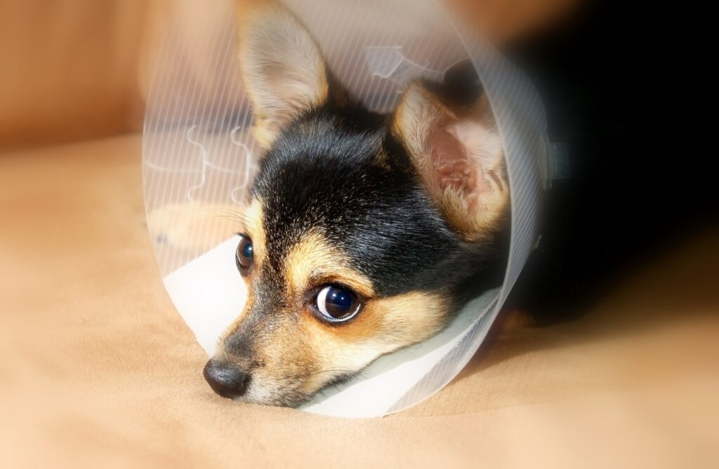 does my dog need a health insurance plan - sick puppy recovery