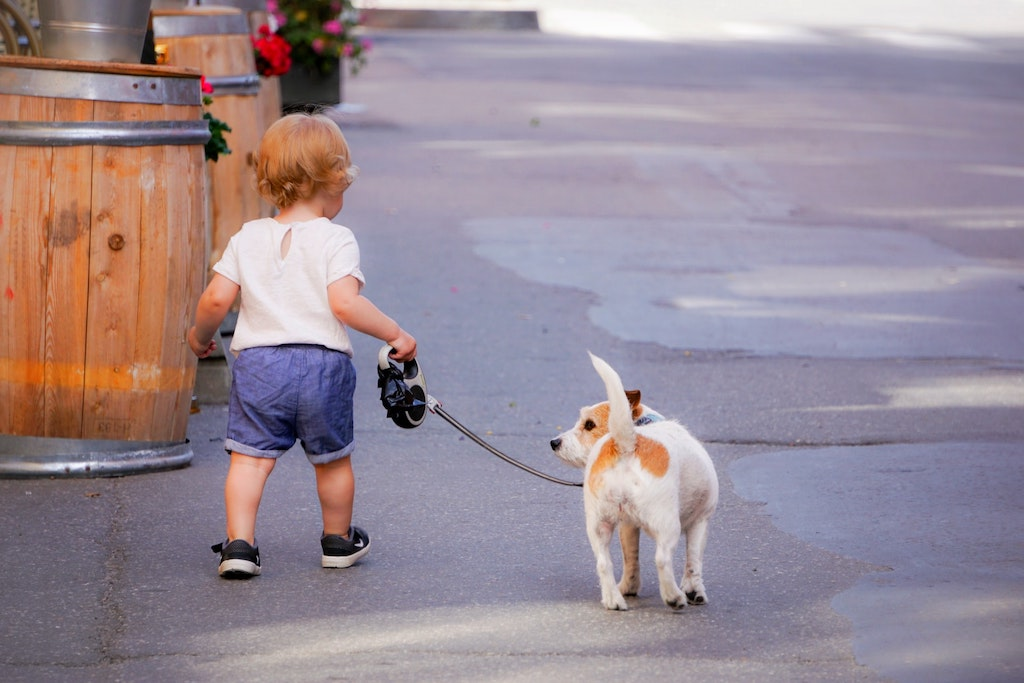 toddler walking a dog on a leash