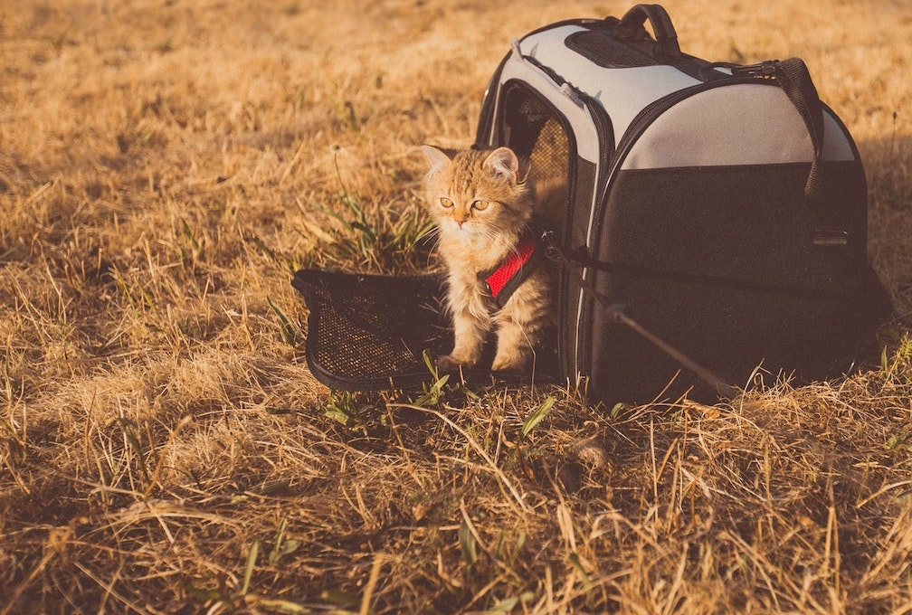traveling with cats -  - travel cat bag