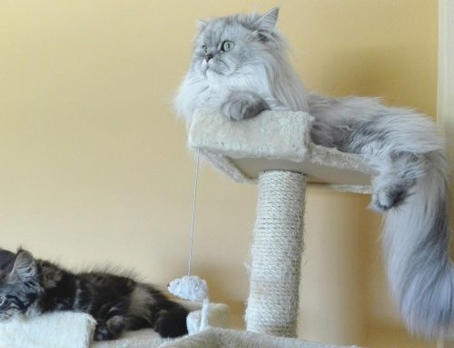 Cat Furniture – What Should You Get for Your Cat?
