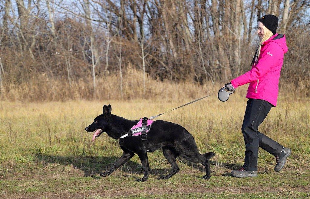 woman dog walking black german shepherd