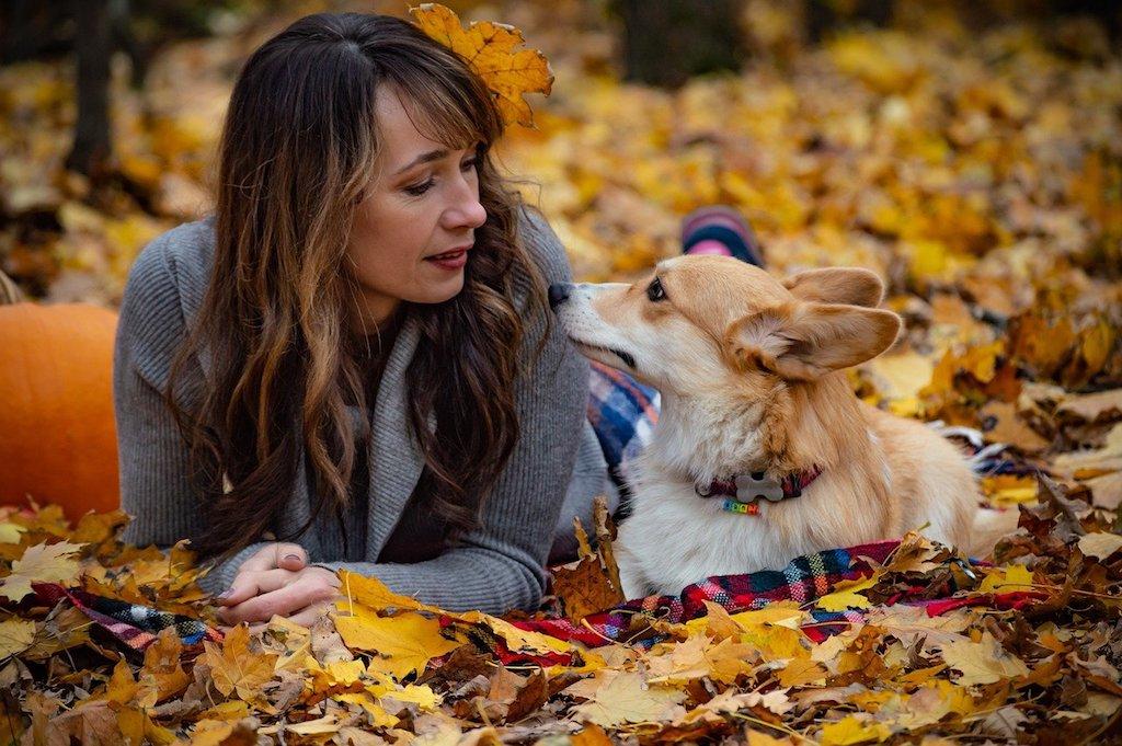 woman looking at a pembroke welsh corgi dog breed