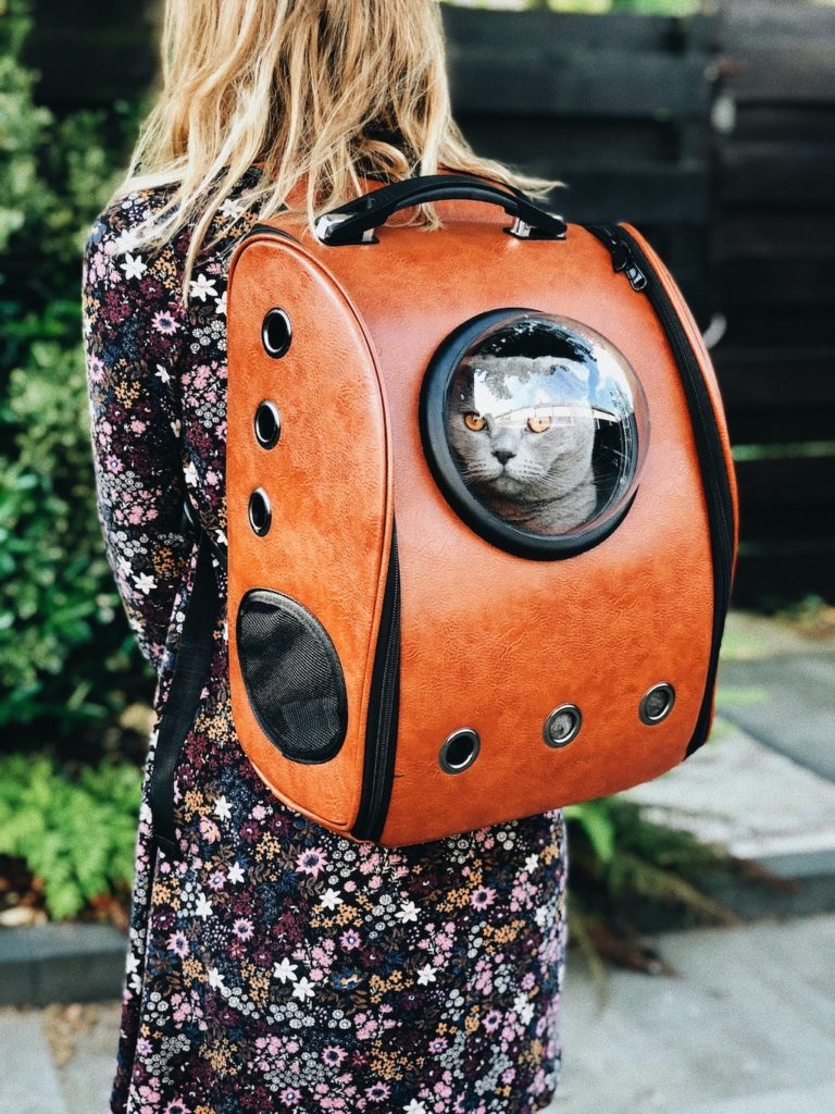 traveling with cats - woman with a cat in a backpack